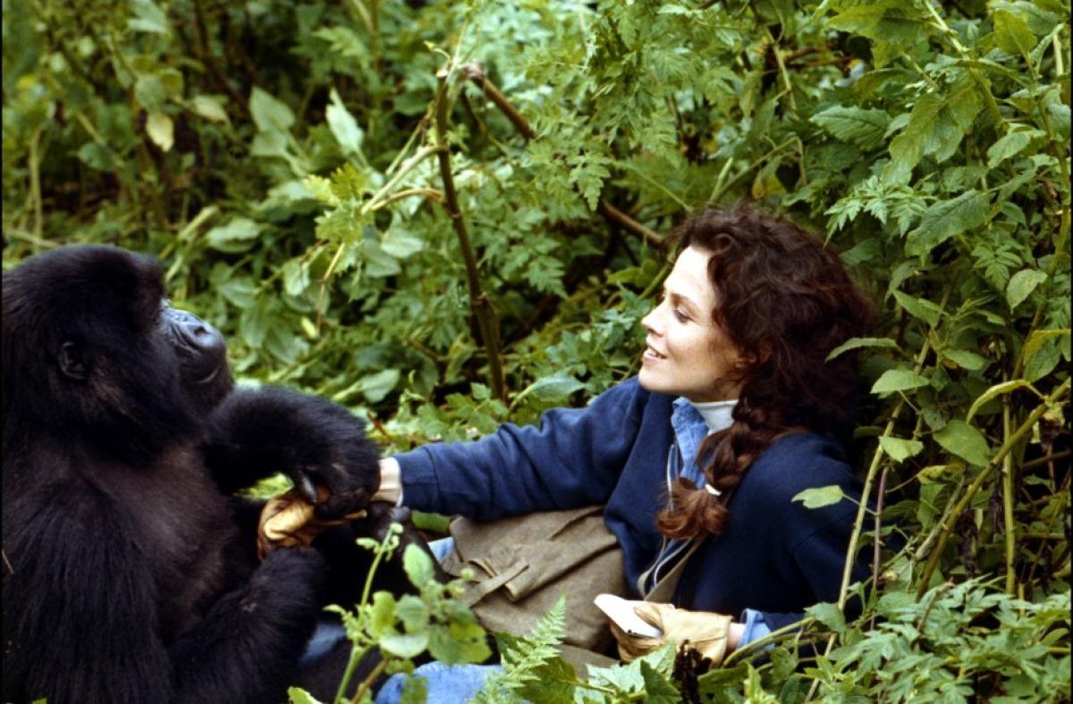 Gorillas in the Mist, 1988